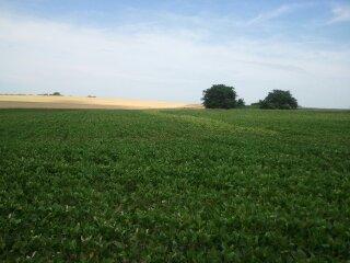 Clean-Fields-photo-3