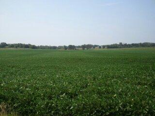 Clean-Fields-photo-4