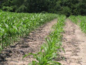 starter-fertilizer-1